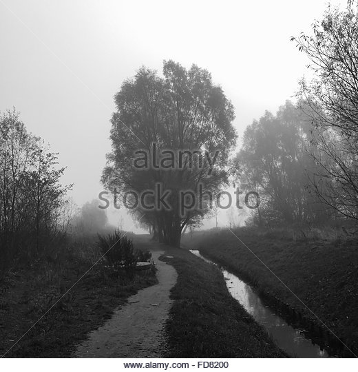 Footpath In Forest - Stock Image