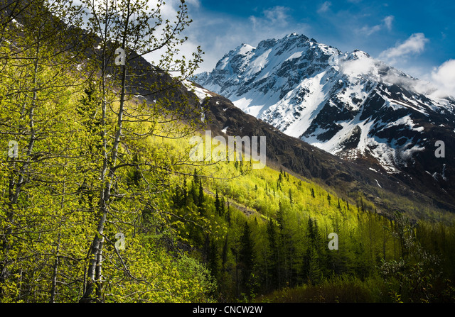 Scenic view of bright green Spring foliage with Bashful Peak in the background,  Chugach State Park, Southcentral - Stock Image