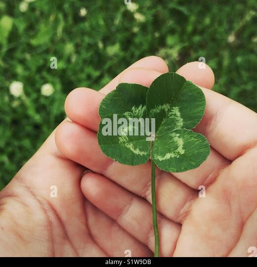 Child's hands holding a four-leaf clover - Stock Image