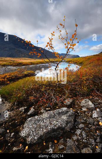 Autumn coloured valley at Malaya Belaya river, Khibiny mountains, Kola Peninsula, Russia - Stock Image