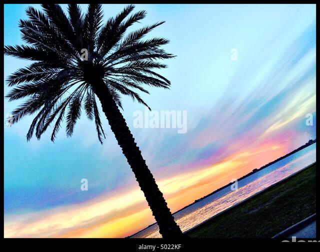 Palm Tree Sunset - Stock Image