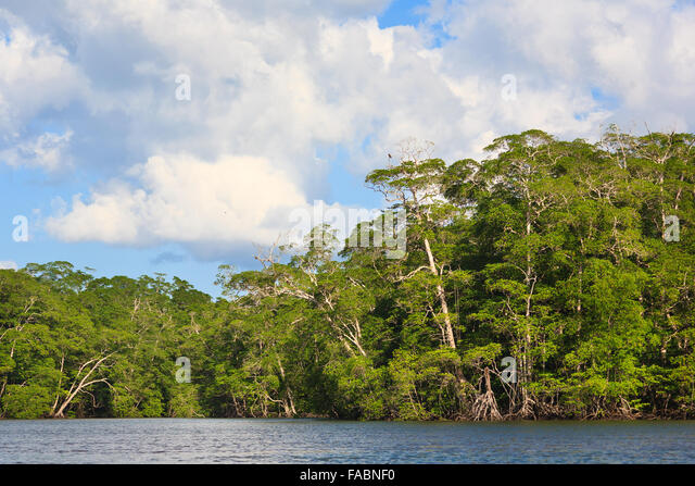 Mangrove forest at the outlet of Rio Mogue, Pacific coast, Darien province, Republic of Panama. - Stock-Bilder
