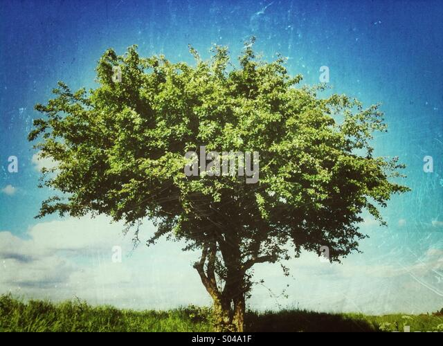 Tree with grunge effect applied - Stock Image