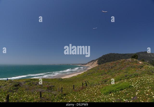 Hang gliders Soars Over the California Coast, Ano Nuevo Bay, California - Stock Image