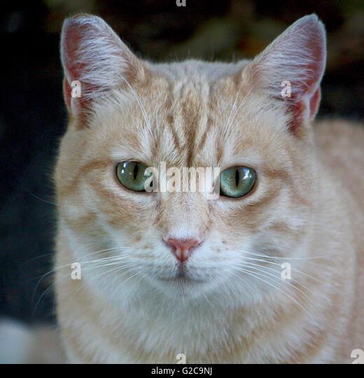 Cute Cat Is Sitting On Wooden Windowsil