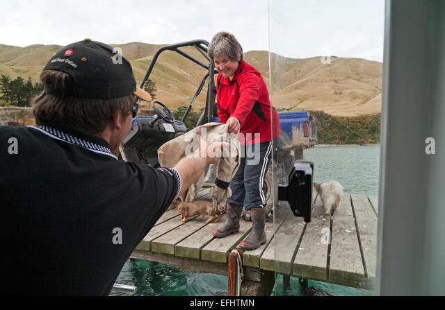 Mail delivery by mailboat, Marlborough Sounds, South Island, New Zealand - Stock Image