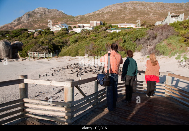 Tourists taking photos of penguins from boardwalk at Boulders Beach,Cape Town,Western Cape Province - Stock Image