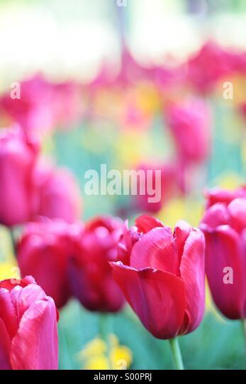 Flowers, Dublin - Stock Image