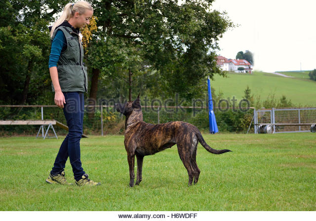 Dog schaefer stock photos amp dog schaefer stock images alamy