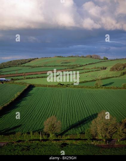 Scenic View Of Farmland - Stock Image