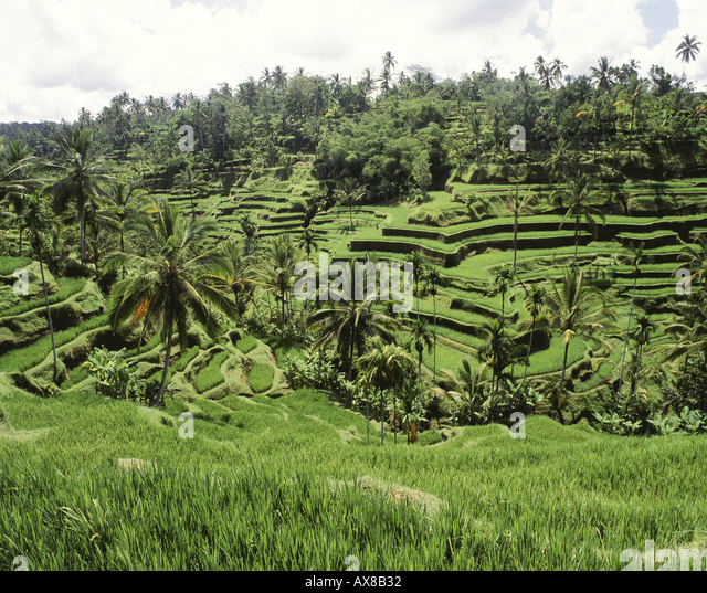 Rice Terraces - Stock-Bilder