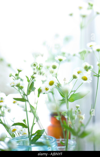 Wildflowers in colored jars against a window - Stock Image