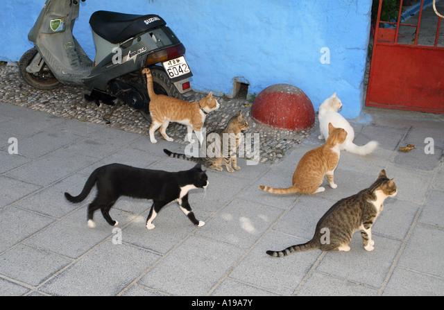 mehrere Katzen vor Haus Stockbild