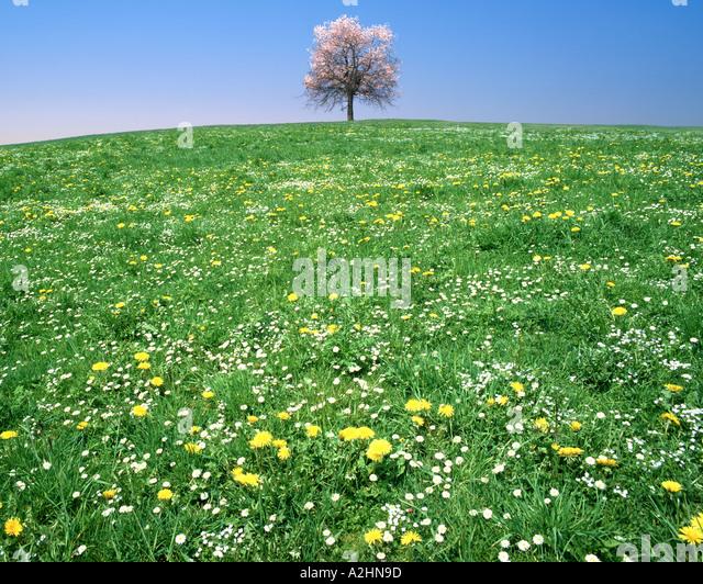Konzept: Frühling der vier Jahreszeiten Stockbild