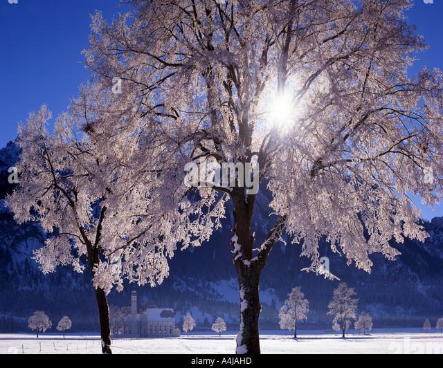 DE - Bayern: Winter am St. Coloman in der Nähe von Schwangau - Stock-Bilder