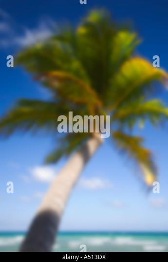 Palme bei Uvero Alto in der Nähe von Playa Del Macao und Punta Cana in der Dominikanischen Republik Stockbild