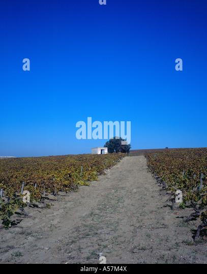 Weingut Straßendreck Kies Jerez De La Frontera Cadiz Andalusien Spanien Europa. Foto: Willy Matheisl Stockbild