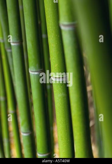 Bambus-Stiele Stockbild