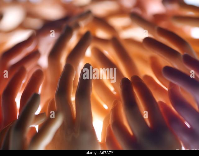 Hände und Finger zu erreichen Stockbild