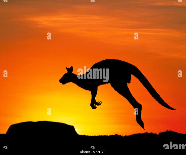 Silhouette des Uluru Ayers Rock und Känguru Northern Territory Australien Stockbild