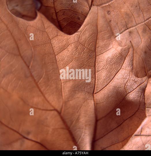 Stillleben mit braunen Herbstblatt Stockbild