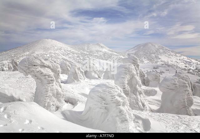 Schnee-Monster - Bäume mit Schnee im Winter Mount Verwaltungssitz Japan auf sie gefroren Stockbild