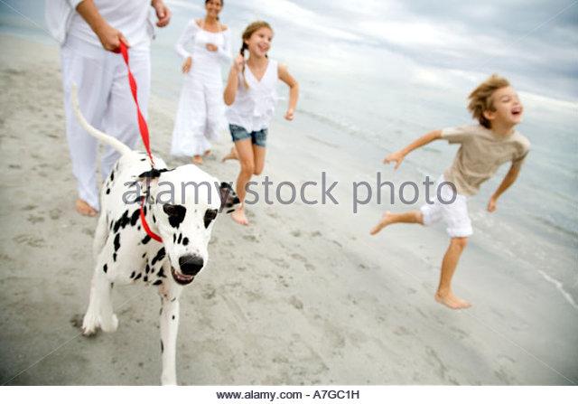 Eine Familie, die dem Hund am Strand spazieren gehen Stockbild