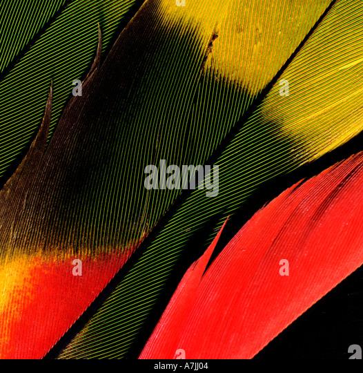 Makro Papagei s Feder erschossen Studio Stockbild