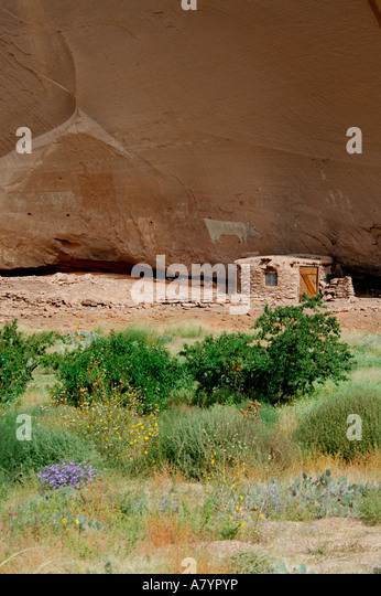Arizona, Navajo Indian Reservation, Chinle, Canyon de Chelly Nationalmonument, Canyon del Muerto. Stehende Kuh Ruinen. Stockbild