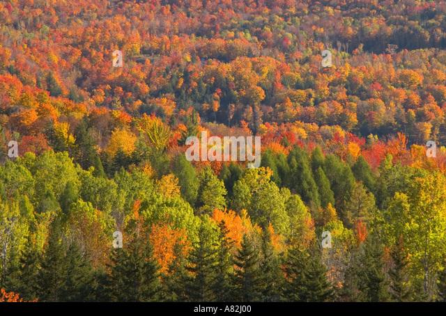 Herbstliche Bäume, Vermont, New England, USA Stockbild