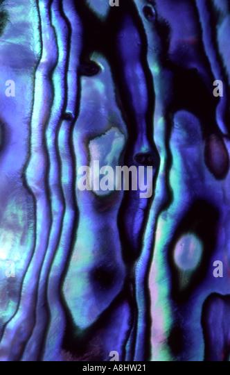 Abstrakten Detail Paua Abalone Muschel Gehäuse poliert Neuseeland Stockbild