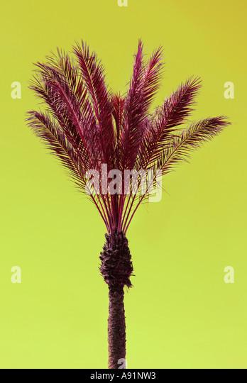 Handflächen Atlantik Kanarische Palmen bin Atlantik Meer Kanarische Inseln Stockbild