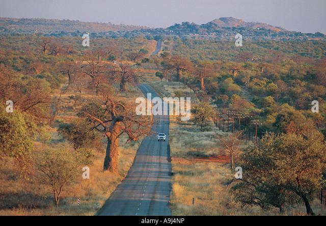 Asphaltstraße mit Baobab-Bäume in der Nähe von Messina Nord-Provinz in Südafrika Stockbild