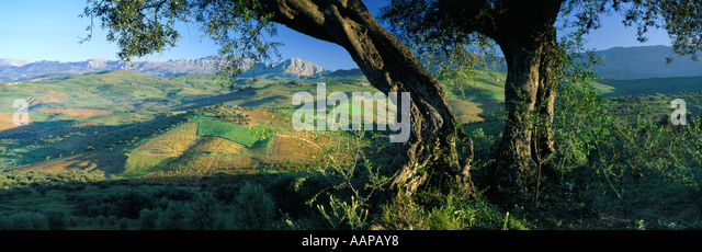 Sierra de Alhama Andalusien Spanien Stockbild