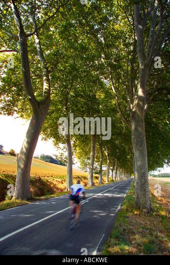 Country Road, Haute Garonne, Midi-Pyrenäen, Frankreich Stockbild