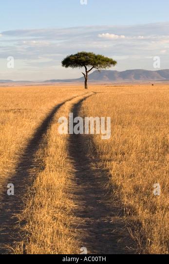 Savanne Landschaft Masai Mara Kenia Afrika Stockbild