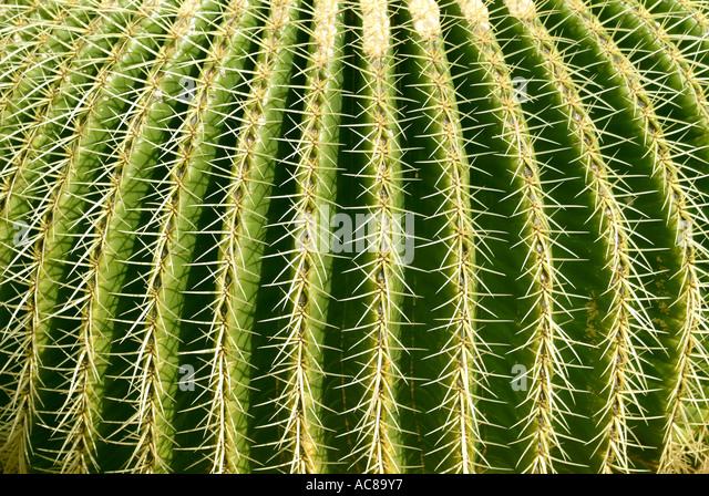 Jardin de Cactus Kanarische Inseln Kaktusgarten Lanzarote Kanarische Inseln Stockbild