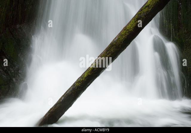 USA, Washington State, Olympic National Park, Wald Wasserfall im Frühling Stockbild