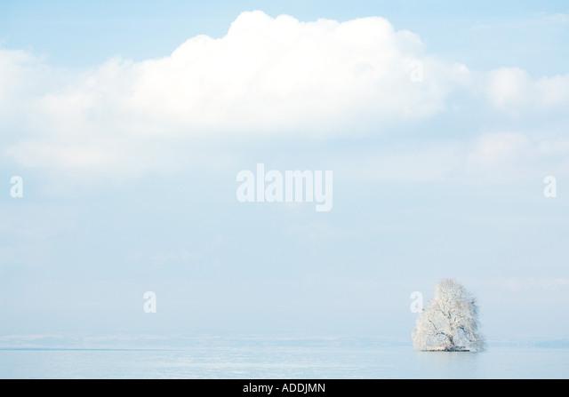 Schneebedeckten Baum im See Stockbild
