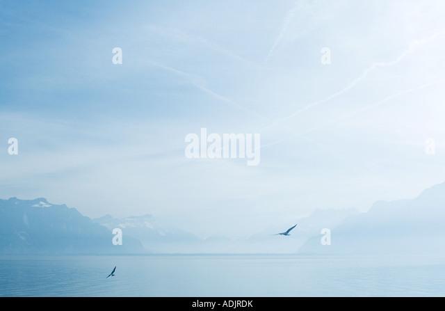 Vögel fliegen über See Stockbild