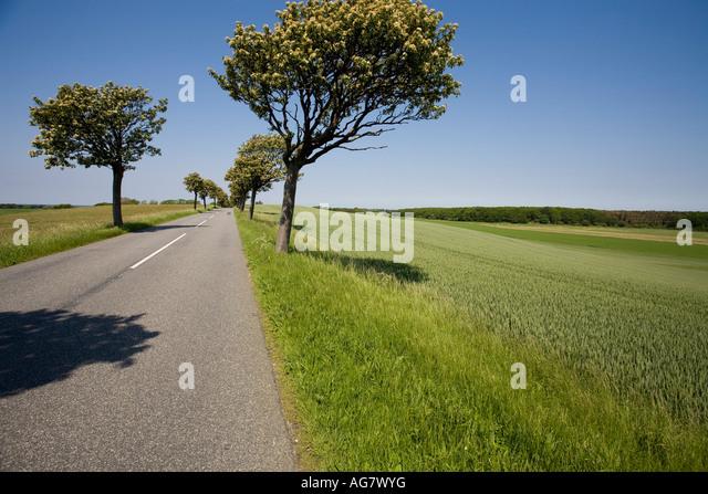 Baum gefütterte Straße mit grünen Feld eine gerade Straße mit einer weißen Mittellinie Stockbild