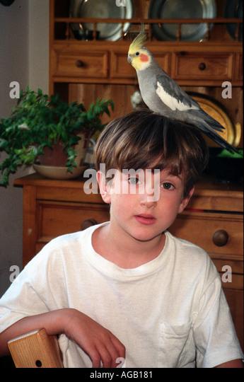 Junge mit einem Nymphensittich auf seinem Kopf. - Stock-Bilder