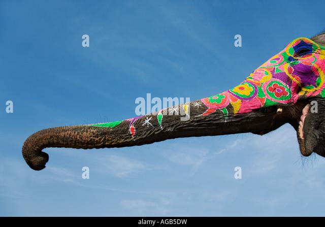 Bemalte Elefantenrüssel Elefanten sind für religiöse und zeremonielle Gelegenheiten dekoriert veröffentlicht Stockbild