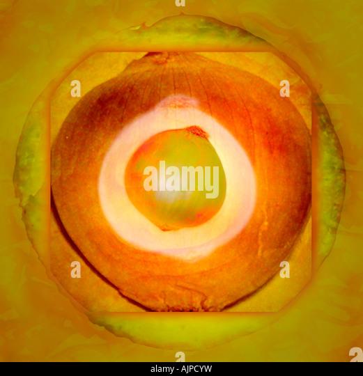 Abbildung einer Zwiebel Stockbild