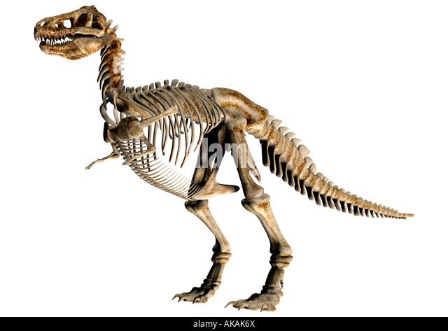 Dinosaurier-Skelett Dinosaurier Skelett Stockbild