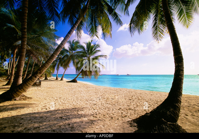 Weißer Sandstrand mit Palmen in der Dominikanischen Republik Stockbild