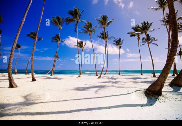 Tropischen Szene aus einem Cluster von Palmen auf einem weißen Sand Dominikanische Republik Strand in Punta Stockbild