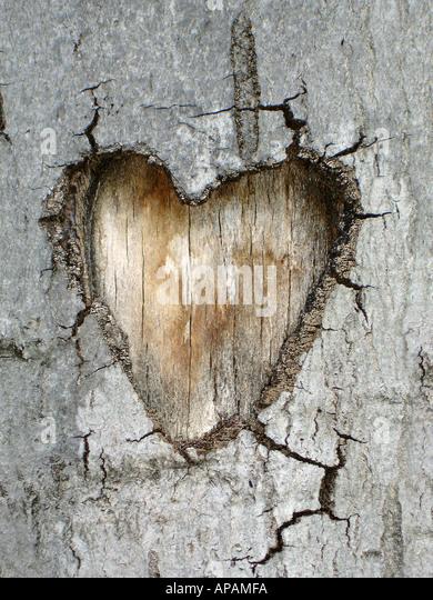 Herzen in einem Baum Herz in Baumrinde Stockbild
