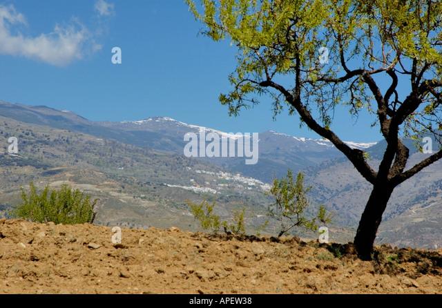 Die Alpujarras Berge, Andalusien, Spanien Stockbild