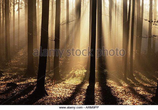 Nebligen Wald und Sonnenstrahlen, Bayerischer Wald, Deutschland, Europa Stockbild